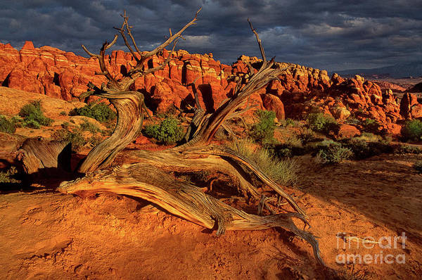 Photograph - Fiery Furnace Arches National Park Utah by Dave Welling