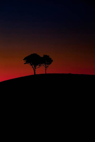 Tree Top Photograph - Dancing In The Dark by Az Jackson