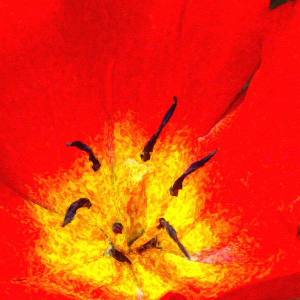 Digital Art - Fiery Tulip by SR Green