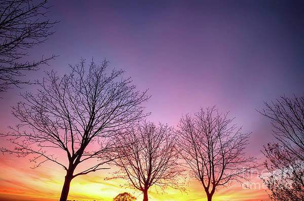 Silhoutte Photograph - Fiery Winter Sunset With Bare Trees by Simon Bratt Photography LRPS