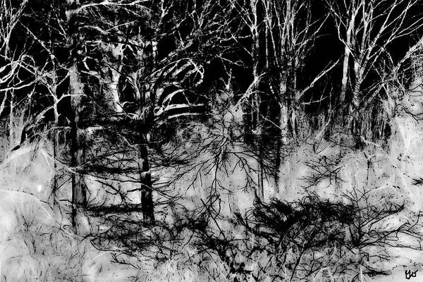 Photograph - Figurative Forest Abstract by Gina O'Brien