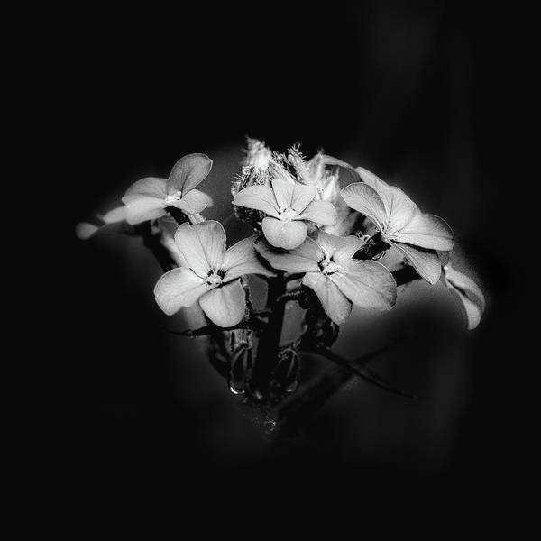 Photograph - Film Noir Bouquet  by David Heilman