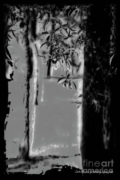 Photograph - Filtering Leaves by Vicki Ferrari