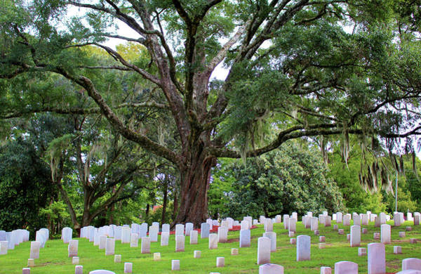Photograph - Final Resting Place by Cynthia Guinn
