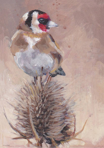 Earthy Drawing - Finch On Thistle by Dina Kalo