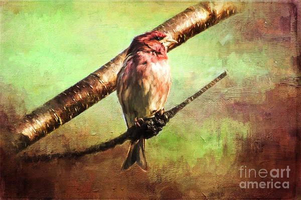 Painting - Finch Songbird On Cherry Tree Burl  by Christina VanGinkel