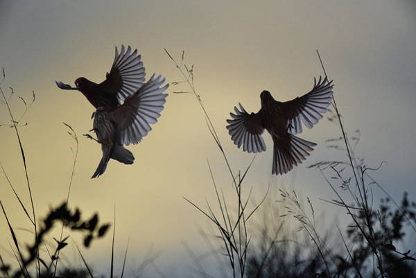 Bird In Flight Digital Art - Finches Silhouette With Leaves 6 by Linda Brody