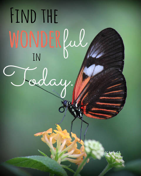 Photograph - Find The Wonderful by Teresa Wilson