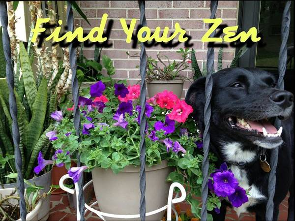 Photograph - Find Your Zen T-shirt  by Kenny Glover