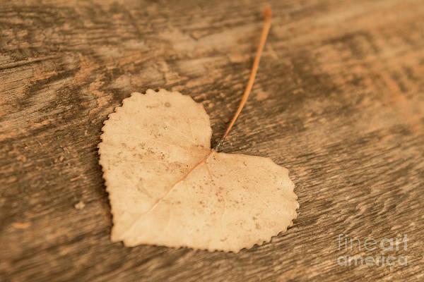 Photograph - Finding Hearts by Ana V Ramirez
