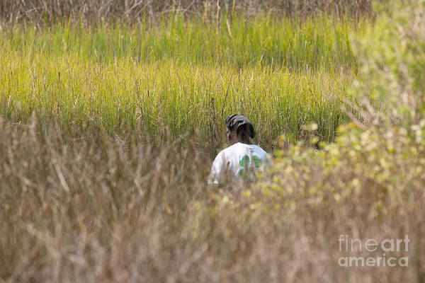 Photograph - Finding Spartina Grass by Dale Powell