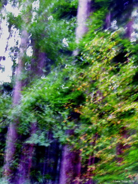 Wall Art - Photograph - Finding The Path  by Jane Tripp