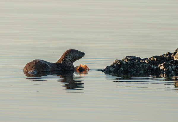 Photograph - Fine Dining - Otter Style by Loree Johnson