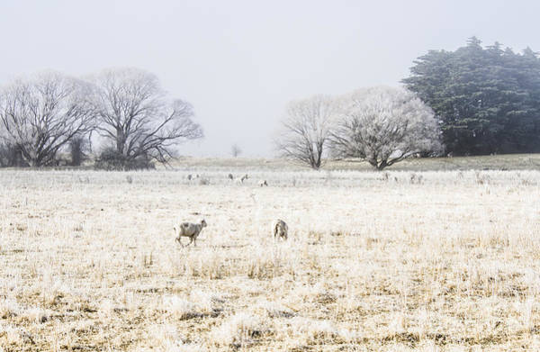 Farmyard Photograph - Fingal Winter Farmyard by Jorgo Photography - Wall Art Gallery
