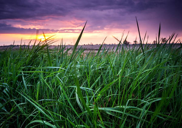 Wall Art - Photograph - Finn Line Grass by Cale Best