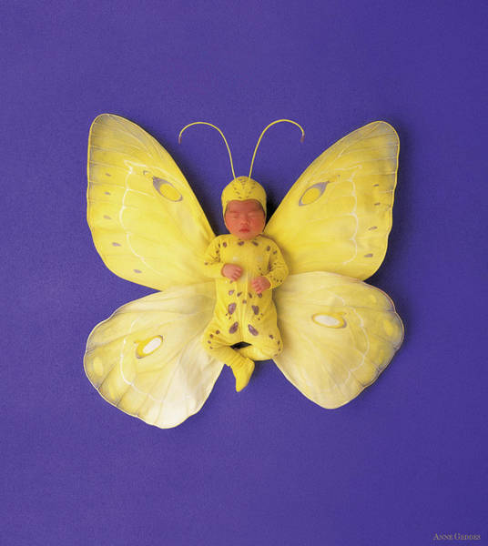 Wall Art - Photograph - Fiona Butterfly by Anne Geddes