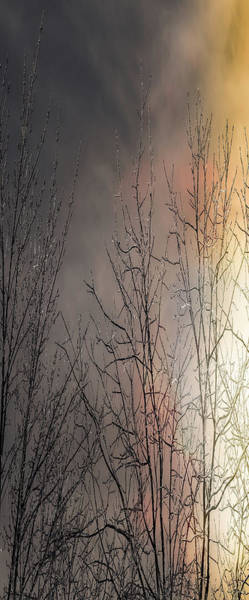 Photograph - Fire And Ice by Donna Lee
