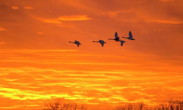 Photograph - Fire Flight by Eilish Palmer