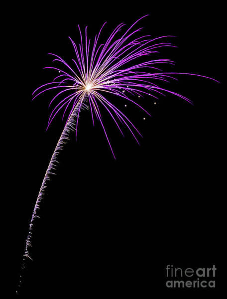 Independence Photograph - Fire Flower by DiFigiano Photography