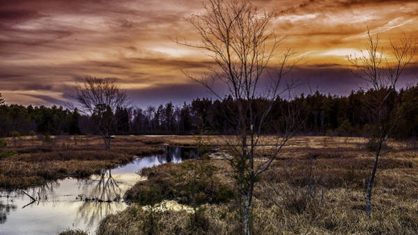 Photograph - Fire In The Pine Lands Sky by Louis Dallara