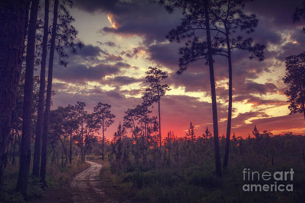 Photograph - Fire In The Sky by Tim Wemple