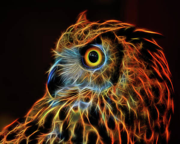 Digital Art - Fire Owl by Wes and Dotty Weber