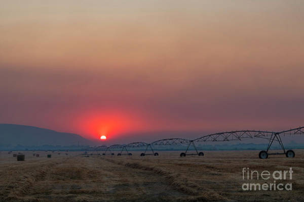 Wall Art - Photograph -  Fire Red Sky  by Mike Dawson