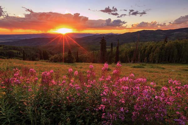 Forest Fire Photograph - Fire Weed Wildflowers Near Buffalo Pass. by Johnny Adolphson