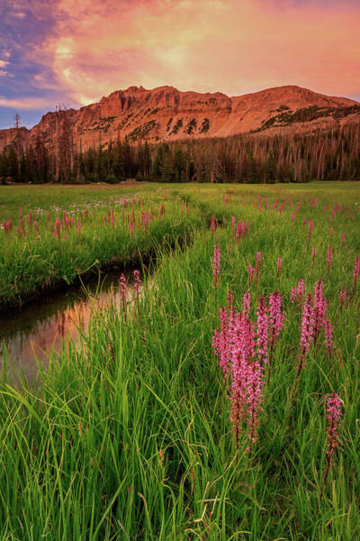 Fireweed Photograph - Elephants Head Wildflowers With Hayden Peak, Uinta's by Johnny Adolphson