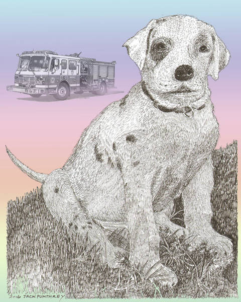 Pup Drawing - Firehouse Dalmatian Puppy by Jack Pumphrey