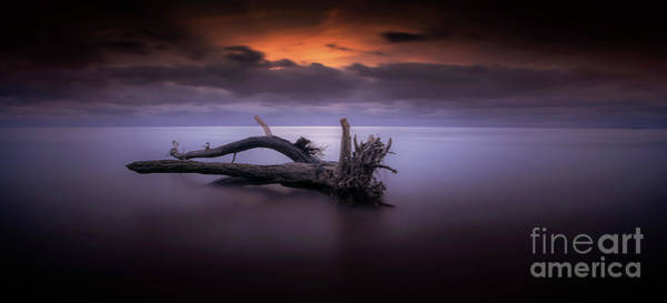 Soul Photograph - Firewood by Marco Crupi