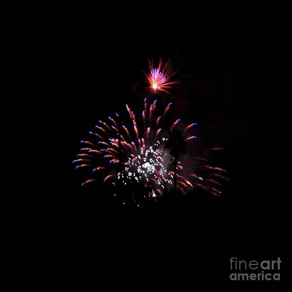 Photograph - Firework  by Bridgette Gomes