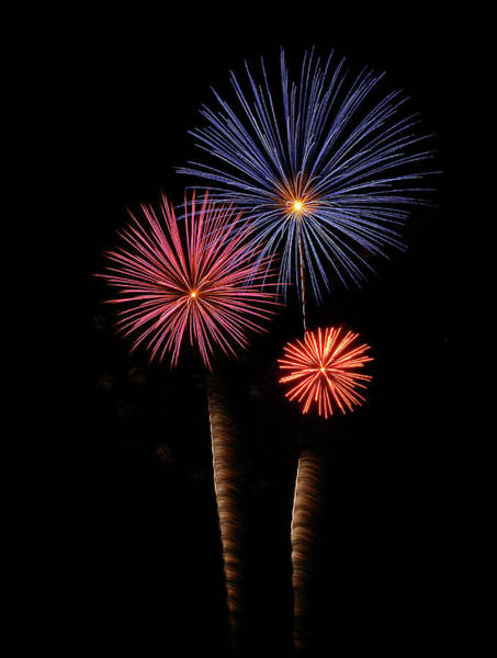 Photograph - Firework Trees by Elaine Malott