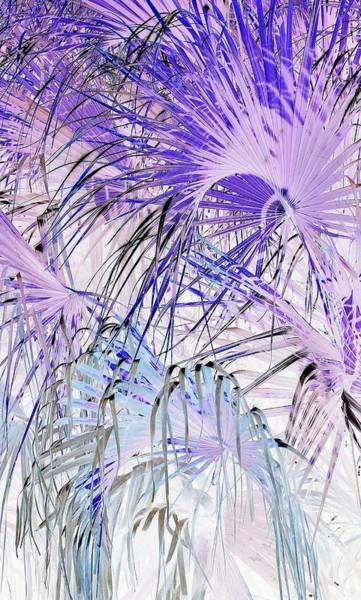 Palm Frond Digital Art - Fireworks by John Hintz