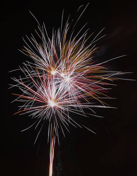 Photograph - Fireworks Midnight Dandelion by Scott Lyons