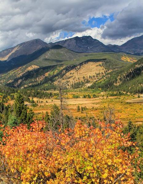Photograph - First Autumn Leaves In Rocky Mountain National Park by Dan Sproul