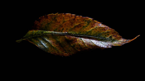 Photograph - First Fallen  by Tom Woll
