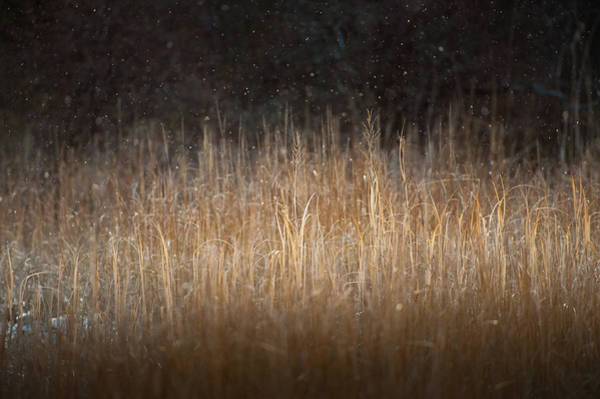 Photograph - First Flakes by John Whitmarsh