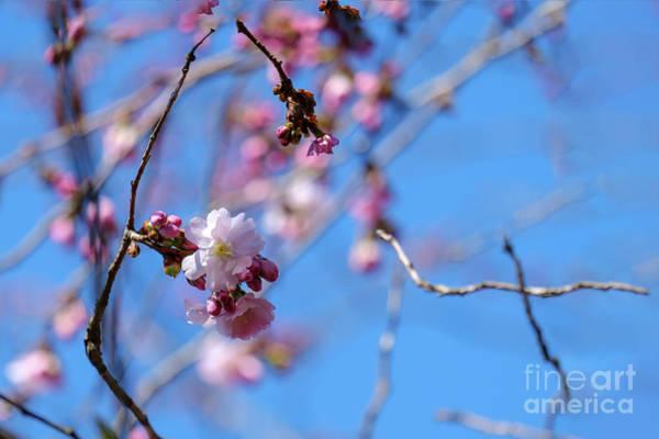 Photograph - First Flowering by Marina Usmanskaya