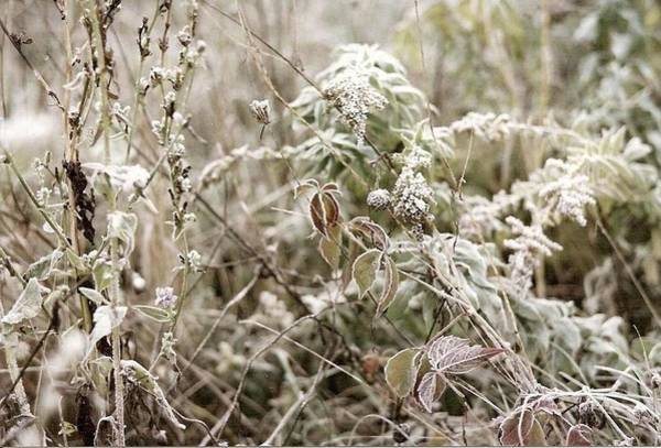 Photograph - First Frost by Mary Wolf