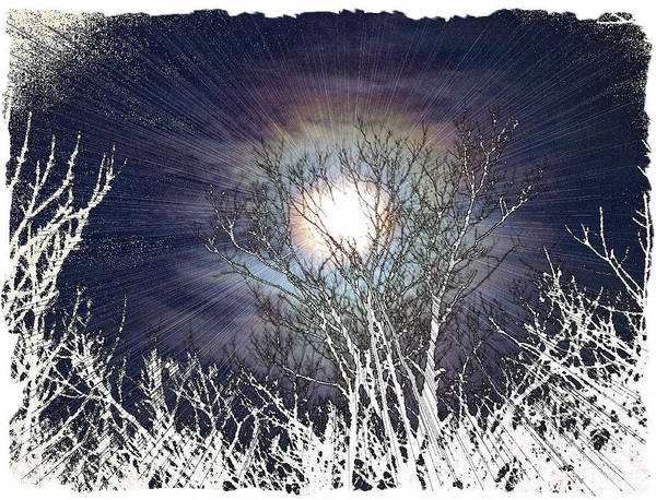 Wall Art - Photograph - First Frost by Rose Guay