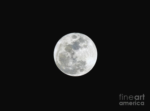 Photograph - First Full Moon Of 2016 by Eddie Yerkish