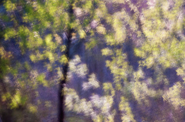 Photograph - First Leaves by John Whitmarsh