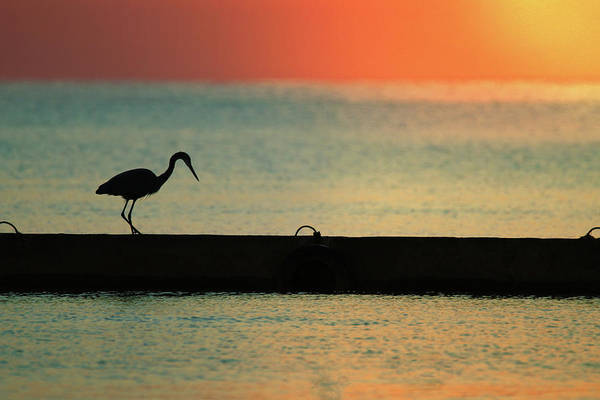 Great Blue Heron Wall Art - Photograph - First On The Jetty by Rob Blair