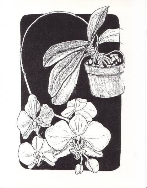 Houseplant Mixed Media - First Prize Moth Orchid by Vincent Mantia