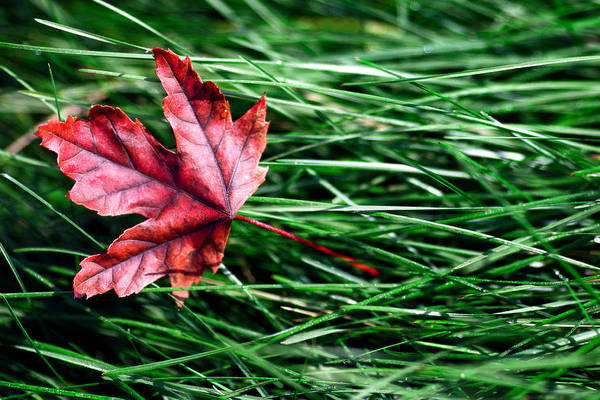Photograph - First Signs Of Autumn by Todd Klassy