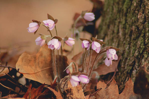 Photograph - First Signs Of Spring by Viviana  Nadowski