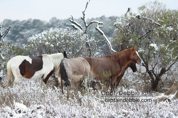 Photograph - First Snow 2016 Diamond Jewel by Captain Debbie Ritter