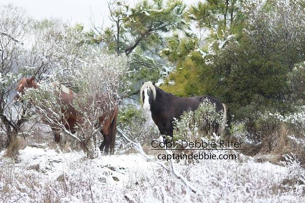 Photograph - First Snow 2016 Riptide by Captain Debbie Ritter