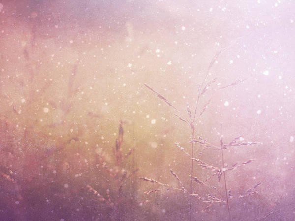 First Snowfall Wall Art - Photograph - First Snow As Autumn Fades Vintage by Georgiana Romanovna